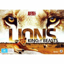 Lions: King Of Beasts - Region 4