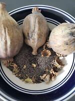 25 LB Poppy Seeds Premium Quality Organic Food Grade Organic