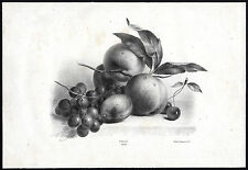 Antique Master Print-STILL LIFE-FRUIT-APPLE-GRAPE-CHERRY-Anton Weiss-1850