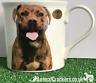 Staffordshire Bull Terrier Staffy Staffie mug print 2 sides Leonardo gift boxed