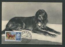 SAN MARINO MK 1956 HUNDE DOGS IRISH SETTER CARTE MAXIMUM CARD MC CM d7673