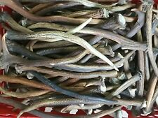 More details for 1kg. mix of scottish deer single point antlers