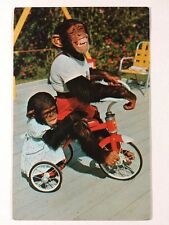 Chimpanzees at Monkey Jungle Island Miami, Florida Chrome Postcard Unused