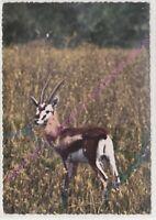 CPSM AFRIQUE AFRICA FAUNE AFRICAINE Antilope Edt LA CARTE AFRICAINE