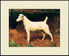 SMOOTH FOX JACK RUSSELL TERRIER LOVELY DOG PRINT MOUNTED READY TO FRAME