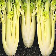 Celery Gold Self Blanching Vegetable Seeds