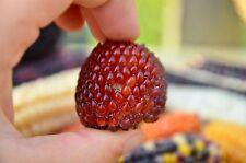 Erdbeermais ,Gemüse Popmais Saatgut 10+ Samen aus Eigenanbau