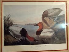 Canvas Backed Duck Drawn From Nature  J.J.Audubon Engraved Printed by Havel 1836
