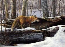 "Scott Zoellick ""Curiosity"" Red Fox Print SN"