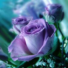 Free Shipping Fresh Blue Rose Flower Seeds 60 Home Garden Yard