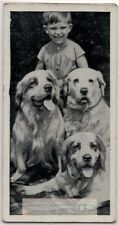 Clumber Spaniel Dogs With Young Child 1930s  Ad Trade Card