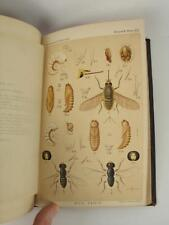 US Entomological Commission Rocky Mountain Locust Western Cricket 1880 w/ Maps