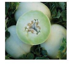 30 Seeds Honey Dew Green Flesh melon Heirloom Cantaloupe Delicious Sweet 6+ Lbs