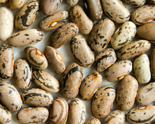 Beans, Rattlesnake Pole 150 Heirloom, Organic, Non - Gmo Seeds.Combined Shipping