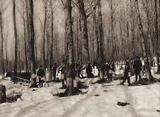 1925 Vintage Print CANADA ~ Quebec Maple Syrup Trees Food Kitchen Snow Photo Art
