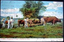 CUBA ~ 1907 Tobacco Farming? Oxen Drawn Ploughing ~ Arando en Cuba