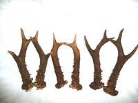 ONE PAIR OF ROE DEER ANTLERS  15cm.-18cm.