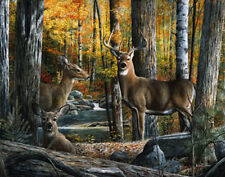 Broken Silence II by Kevin Daniel Nature Wildlife Animal Deer Print Poster 16x20