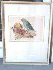 Bild Grafik Papagei Farbdruckgraphik Rahmen 1950er Zoologie Naturdarstellung