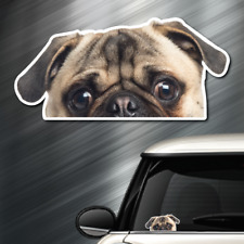 "(1) Pug DOG Peeper Sticker Window Peep Decal Car Auto AKC Puppy 3.5""x7.3"" NEW"
