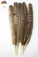 Natural Pheasant Tail Feathers 8-10inch/20-25cm 10-100PCS Carnival Diy costume