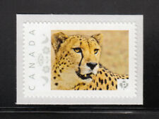 CHEETAH, GEPARD wild cat picture postage stamp MNH Canada 2013 [p4w6/4]