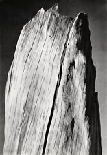 1936/63 Vintage 16x20 Abstract DEAD TREE Wood Sierra Nevada Photo ~ ANSEL ADAMS