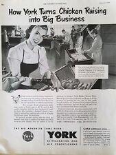 1952 York air conditioning Refrigeration turns chicken raising  big business ad