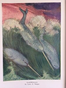 Vintage book plate/print by Louis A. Sargent of narwhals