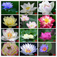 20pcs Lotus Bowl Water Lily 11varieties Flower Seeds Nymphaea Plants Balcony