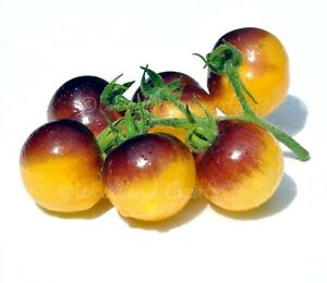 Gold Berries Cherry Tomato Seeds Organic Heirloom Yellow Fruit Free Shipping