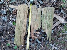 Cabbage Palm Bark Orchid Mount All Natural