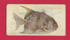 ALLEN  &  GINTER  -  RARE FISH FROM AMERICAN WATERS CARD  -  MOONFISH  -  1889