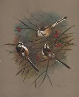 VINTAGE BIRD PRINT ~ LONG TAILED TIT ~ BASIL EDE