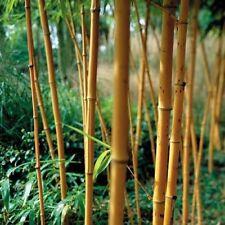Full Sun Evergreen H6 (-20 to -15 °C) Shrubs & Hedges