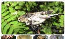 5,0Mx2,5Mx16MM Rete Giappone  Japannetz   70D/2ply Piege Oiseaux  Mist net