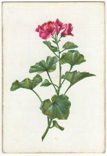 Playing Cards 1 Single Swap Card - Old Wide Square Corner GERANIUM FLOWER white