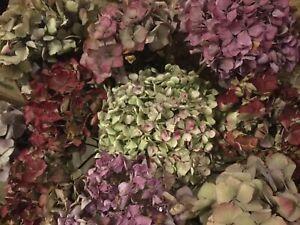6 Dried Hydrangea Flowers Blooms Heads Florist Arrangement Wreath  Christmas