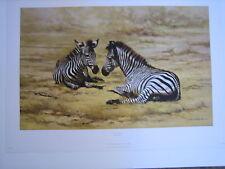 DAVID SHEPHERD AFRICAN CHILDREN – zebra - LIMITED EDITION