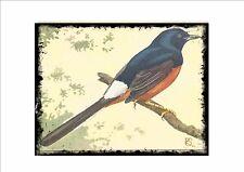 Zorzal Shama Vintage Placa de pared jaula pájaro imagen Sluis aviario signo