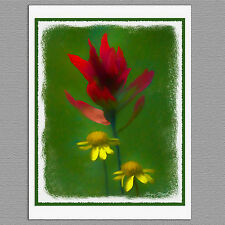 6 Indian Paintbrush Wildflower Flower Painted Syle Handmade Note Greeting Cards