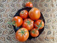 Tomato – Red Ponderosa (solanum lycopersicum) 20 Reliable Viable Seeds