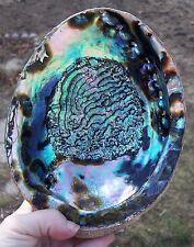 Large Paua Abalone Seashell Rainbow Green Sea Shell Smudging Beach House Decor