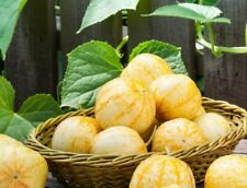 100 Lemon Cucumber seeds Heirloom Excellent. SAME DAY SHIPPING