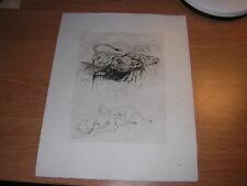 1948.eau forte Odette buffle & lions.animaux