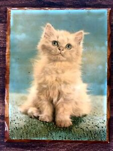 """Vtg MCM White Persian Kitten Lithograph Shellac On Wood Plaque 8.5x11"""""""