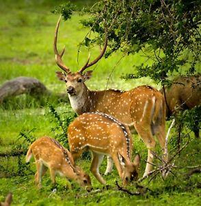 nature photo/picture Sri lanka