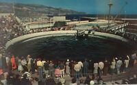 Marineland Oceanarium Dolphin Pool in Palos Verdes, California Vintage Postcard