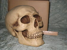 FANTASY/GOTHIC SKULL BANK - Hand-painted - Spooky!