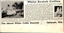 1912 Island White Scotch Collies Oshkosh Wi Dog Vintage Print Ad 708